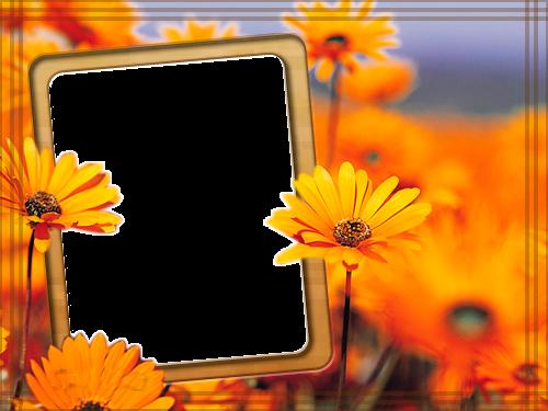 Descargar marcos para fotos gratis